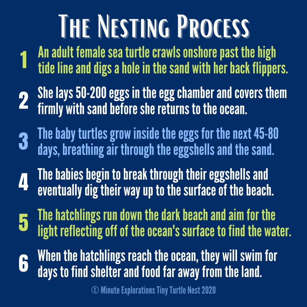 Summary of the sea turtle nesting process