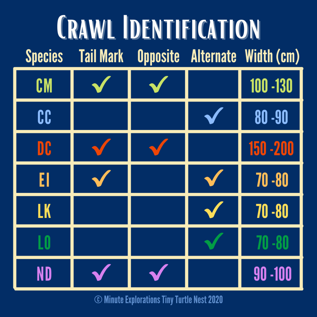 Summary of crawl features by sea turtle species